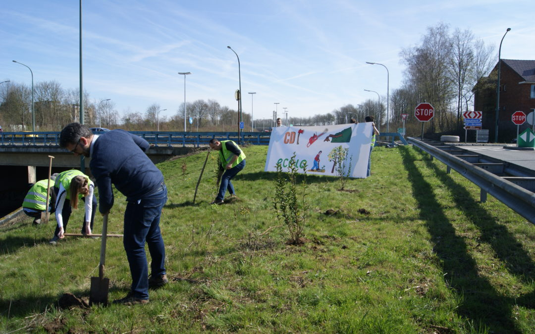 ECOLO se mobilise contre l'abattage radical de nos bords de routes
